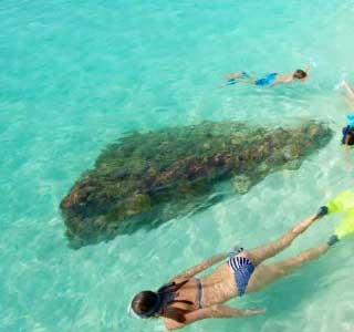 photo of people snorkeling at the dry tortugas