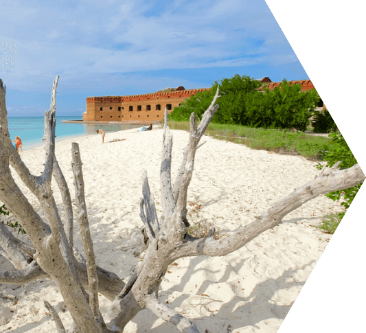 Knarly driftwood on a white sandy beach overlooking Ft. Jefferson in the Dry Tortugas