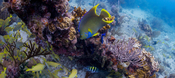 underwater photo of the reef and various fish