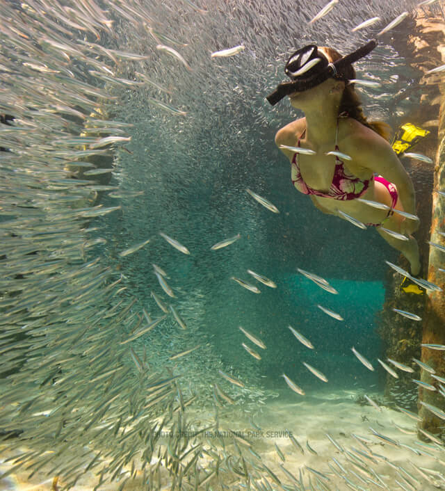 photo of people snorkeling in the dry tortugas Mobile