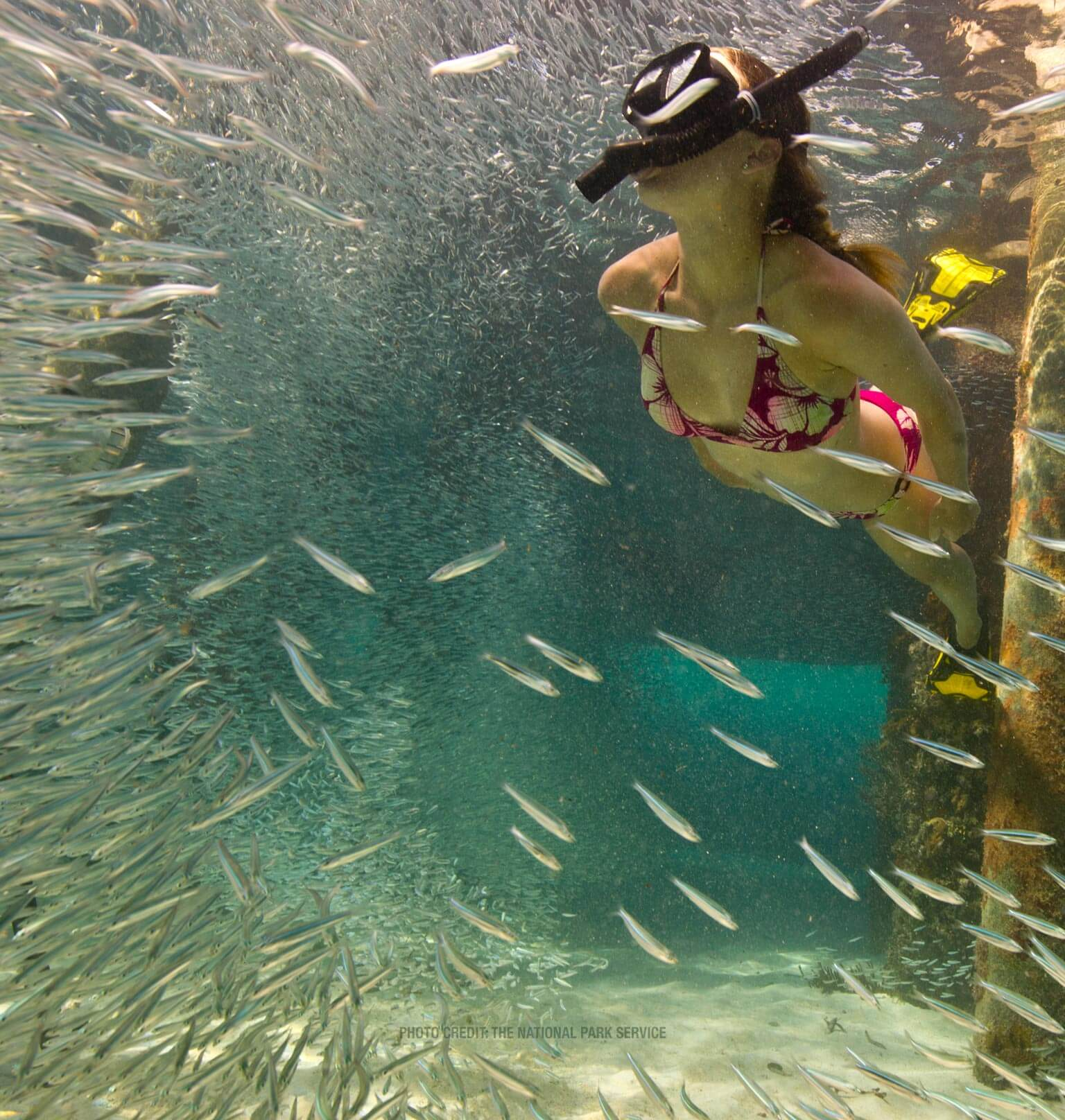 photo of people snorkeling in the dry tortugas Tablet