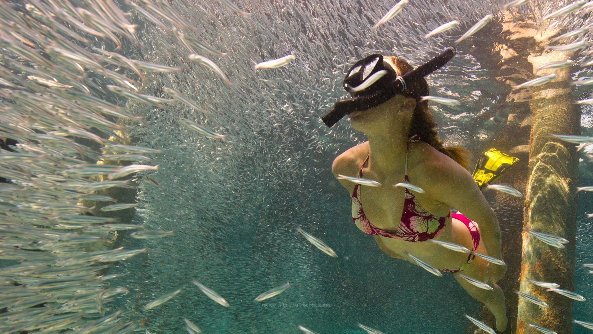 photo of people snorkeling in the dry tortugas Desktop